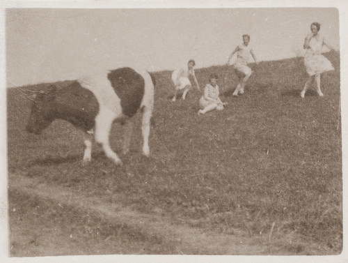 Old sepia photo of girls trying to catch a cow in a paddock