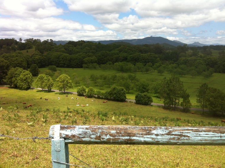 A rural view looking towards Mt Warning